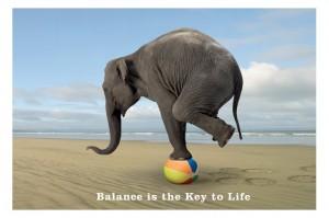 elephant-balance-300x199